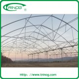 Strong plastic film greenhouse for tomato cultivation
