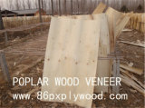1.0mm Poplar Veneer/Nature Wood Veneer/Rotary Cutting Poplar