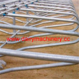 Galvanized Steel Pipe Cow Free Stall