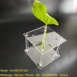Custom Acrylic Flower Display Stand