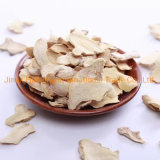 Competitive Price Fresh Fat Ginger with Super Quality for Export