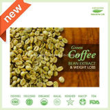Pure Green Coffee Bean Extract 50% Chlorogenic Acid