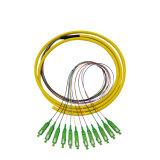 Manufacture Price Sc/APC Connector Sm Fiber Optic Optical 12 Corers Bunchy Pigtail