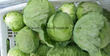 Competitive Fresh Cabbage with Green Skin