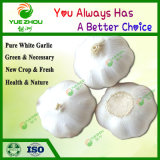 New Crop Cheap Pure White Garlic for Wholesale