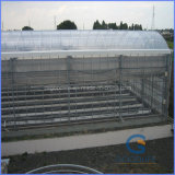 92% Light Transmission Polycarbonate Hollow Sheet for Greenhouse