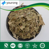 Folium Ilecis with High Quality and Competitive Price, Traditional Chinese Medicine