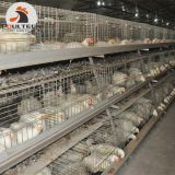 Hot Selling Philippines Chicken Farm a Type Broiler Cage Used in Poultry House
