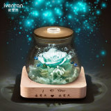Luminous Preserved Flowers for Home Christmas Decoration