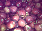 Chinese Fresh Red Delicious Huaniu Apple
