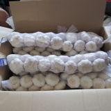 Online Wholesale Chinese Fresh Garlic Normal White Garlic 5.0cm Size