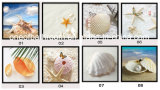 Beach Sea Shell Pictures for Wall Decoration