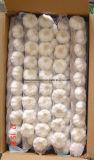 China Wholesale New Crop Sack Fresh Braid Garlic