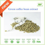 High Quality GMP Standard Green Coffee Bean Extract 50% 60% Chlorogenic Acid
