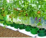 High Quality Tomato Grow Pots China Supplier