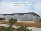 Elegant Multi-Span Tunnel Greenhouses