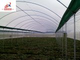 Muti-Span Film Green House Work for Vegetable Planting