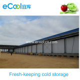 Angola Under Construction Large Scale Cold Storage for Vegetables and Fruits Fresh Keeping