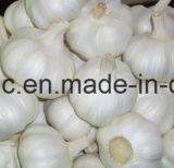 Chinese Fresh Red Normal/Pure White Garlic