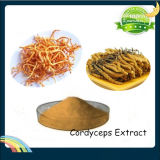Cordyceps Sinensis Extract Polysaccharides 30%