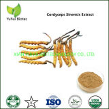 Natural Cordyceps Sinensis Mycelium Extract Supplement for Cancer