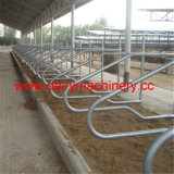 Hot Galvanized Steel Pipe Cow Free Stall
