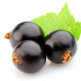 CAS No. 84082-34-8 100% Natural Black Currant Seed Oil
