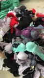 Fashion Stock Clothes Lady Bra Brassiere for Sale