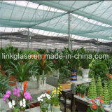 New PE Plastic Shade Net with UV for Agricultural Vegetalbe Greenhouse (YHZ-SDN03)