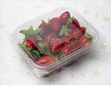 Small Disposable Tomato Plastic Box