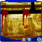 Pre-Engineered New Building Construction Materials for Chicken Farm