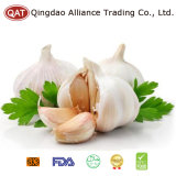 White Garlic from QINGDAO ALLIANCE