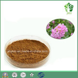 Weight Loss Corosolic Acid 1%~98% Banaba Leaf Extract