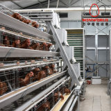 Galvanized Used Poultry Farm Laying Chicken Cage for South Africa