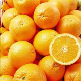 Bonanza van Skaggs Niveau 2 van de Sinaasappel van de Navel
