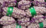 Prezzo più poco costoso dell'aglio e buona qualità