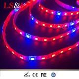 La pianta del LED coltiva l'indicatore luminoso di striscia con il Ce & RoHS di DC12/24V 60LEDs/M