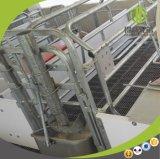 Equipamento de exploração agrícola de parada do porco da caixa do projeto europeu