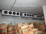 Grande congelador industrial personalizado da capacidade elevada do tamanho para a fábrica de processamento do Refrigeration das frutas dos vegetais