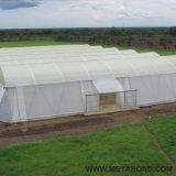 Réseau d'insecte d'agriculture blanche de HDPE anti (50-240 g/m2)