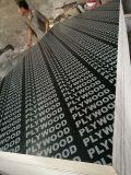 12-15mm encofrados de madera contrachapada de contrachapado marino/Película/madera contrachapada frente a Singapur