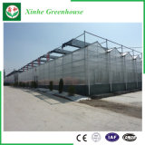 Agricultura de 2017 projetos/estufa de vidro comercial com sistema de ventilação