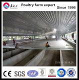 Structure en acier de construction de la volaille à griller Hangar agricole de la conception de la chambre de poulet