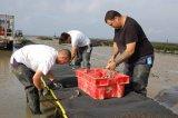 Sacchetti resistenti dell'ostrica nel servizio dell'Australia
