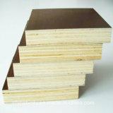 Película Negra enfrenta la madera contrachapada con buena calidad y precio competitivo