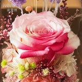 De Echte Bloem van 100% voor de Gift van de Verjaardag van de Dag van de Valentijnskaart