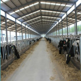 Acero galvanizado Establo Establo Casa vaca con alta calidad