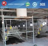 4 niveles de capacidad de 160 aves de jaula de pollo de granja avícola