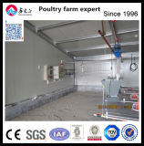 Chicen 농장 사용 닭장과 자동 장비