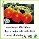 完全なスペクトルPAR30 12W E26 LEDは温室のHydroponic有機性のために軽く育つ